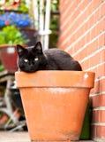 Chat dans le pot de fleur Photos libres de droits