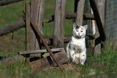 Chat dans le pré Photographie stock libre de droits