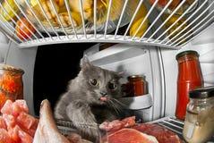 Chat dans le réfrigérateur volant les produits et la viande Photo libre de droits