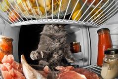 Chat dans le réfrigérateur volant les produits et la viande 2 Photographie stock