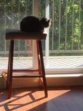 Chat dans le rayon de soleil Images stock