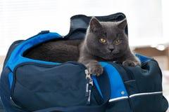 Chat dans le sac bleu de sports Photos stock