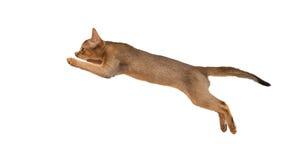 Chat dans le saut Photographie stock