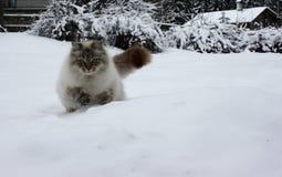 Chat dans le saut photographie stock libre de droits