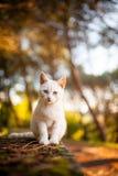 Chat dans le sauvage Photo stock