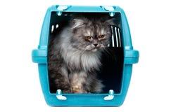 Chat dans le transporteur de cage Image stock