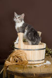 Chat dans le Washtube Photographie stock libre de droits