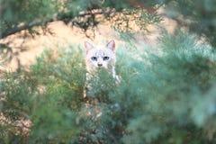 Chat dans les buissons Photo libre de droits