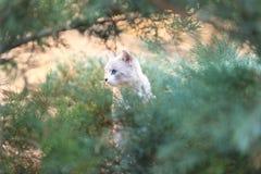 Chat dans les buissons Photographie stock