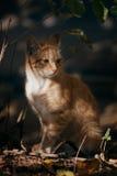 Chat dans les buissons Images libres de droits