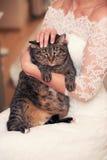 Chat dans les mains de la jeune mariée Photo stock
