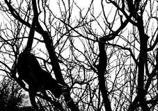 Chat dans un arbre Photographie stock libre de droits