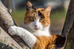 Chat dans un arbre image libre de droits