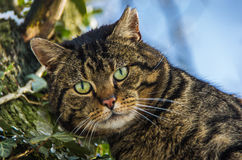 Chat dans un arbre Photo stock