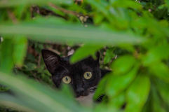 Chat dans un buisson Image libre de droits