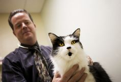 Chat dans un bureau vétérinaire photo libre de droits