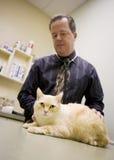 Chat dans un bureau vétérinaire image stock