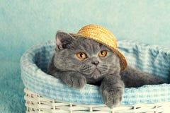 panier chat en anglais