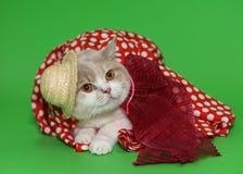 Chat dans un chapeau et une robe. Image libre de droits