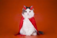 Chat dans un costume de diable Photographie stock libre de droits