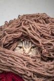Chat dans un fil de laine de fil de pile Photographie stock