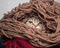 Chat dans un fil de laine de fil de pile Photographie stock libre de droits