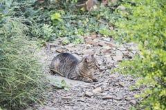Chat dans un jardin Photographie stock libre de droits