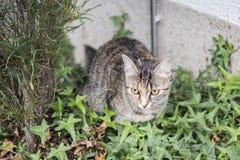 Chat dans un jardin Photo libre de droits