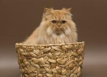 Chat dans un panier. photographie stock