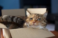 Chat dans une boîte Image stock