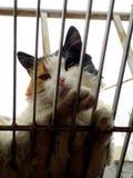 Chat dans une cage photo stock