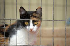 Chat dans une cage photo stock