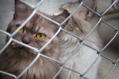 Chat dans une cage Photo libre de droits