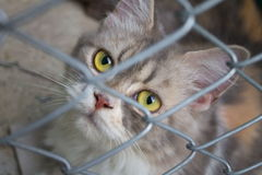 Chat dans une cage Photographie stock libre de droits