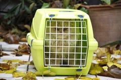 Chat dans une cage sur la rue au milieu des feuilles jaunes image libre de droits