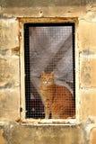 Chat dans une fenêtre Photos libres de droits