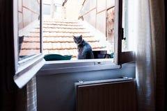Chat dans une fenêtre Photo stock