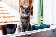 Chat dans une fenêtre Photos stock