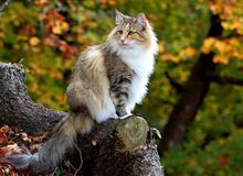 Chat dans une forêt photo libre de droits