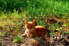 Chat dans une forêt Photos stock