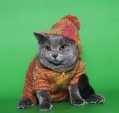 Chat dans une robe. photographie stock libre de droits