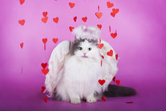 Chat dans une robe d'ange Image stock