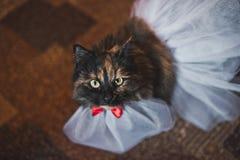 Chat dans une robe de mariage 2497 Images stock