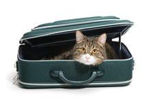Chat dans une valise Photo libre de droits