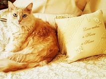 Chat de chat Photo libre de droits