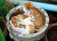Chat de bébé dormant dans le pot Photographie stock libre de droits