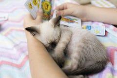Chat de bébé dormant dans les bras d'une fille Photos libres de droits