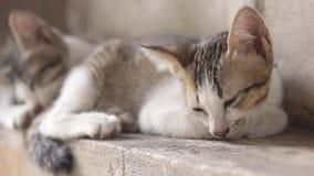Chat de bête perdue de chaton dormant sur le mur banque de vidéos
