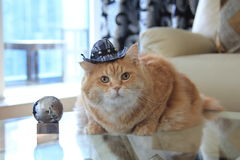 Chat de biscuit avec le chapeau de cowboy Photos libres de droits