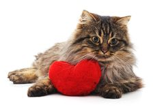 Chat de Brown et coeur rouge Photo stock